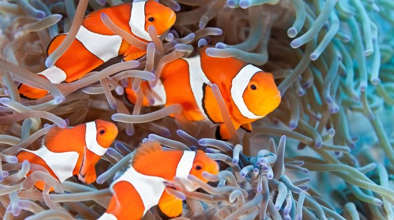 Neben den weißen Traumstränden mit eisblauem Wasser und dem Regenwald mit seinen seltenen Pflanzen und Tieren sind die Similans vor allem für ihre prachtvolle und atemberaubende Unterwasserwelt bekannt.