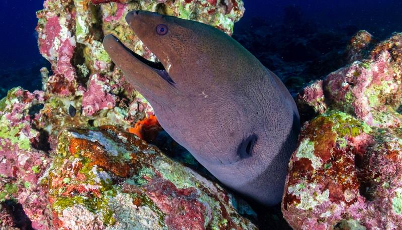 Die Insel aus Granitfelsen wird lediglich von Parkrangern bewohnt und ist eine der Hauptattraktionen der Similans. Das liegt nicht nur an ihrer großartigen Kulisse, sondern auch an den vielen Mantarochen, Delfinen und Walhaien, mit denen man um die Insel Ko Tachai tauchen kann.
