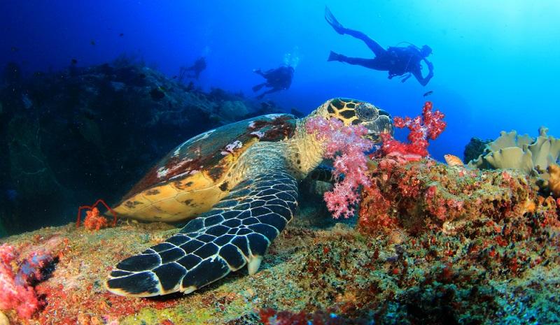 Umso besser das Wetter und umso ruhiger das Meer, umso höher ist die Wahrscheinlichkeit, große Fische anzutreffen.