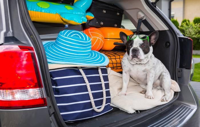 Im Auto zu verreisen ist für die Fellnase die verträglichste Art zu Reisen. (Foto: shutterstock - Patryk Kosmider)